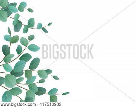 Eucalyptus Silver Dollar. Vector Wreath With Green Eucalyptus Leaves And Branches.