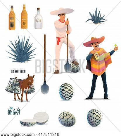 Agave Tequila Production Vector Design With Cartoon Blue Agava Cactus, Tequila Alcohol Drink Bottles