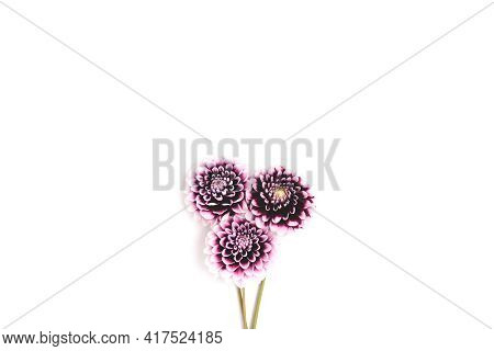 Bouquet Of Dahlia Flowers On A White Background With Copyspace. Springtime Tenderness Composition.