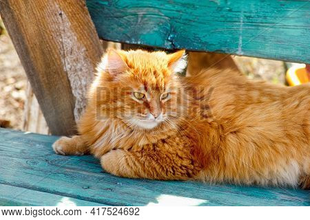 Ginger Cat Lying Down On Wooden Bench Outdoors In Sunny Day.