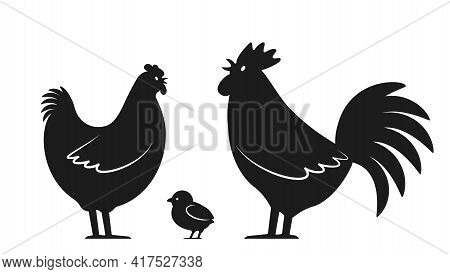 Set Of Domestic Birds From The Farm. Rooster, Chicken And Hen. Template For The Poultry Farm. Vector