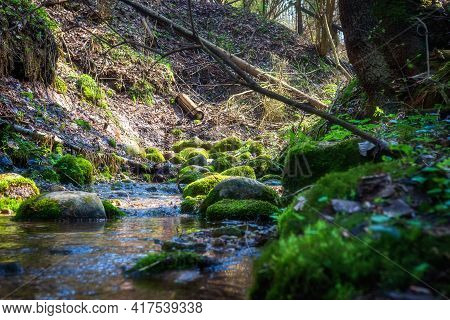 The Scenery Of Spring Woodland. Stream In The Forest. Creek Winding Through Stones In The Forest. Ca