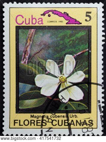Republic Of Cuba - Circa 1983: Postage Stamp Of 'magnolia Cubensis' Printed In Republic Of Cuba. Ser