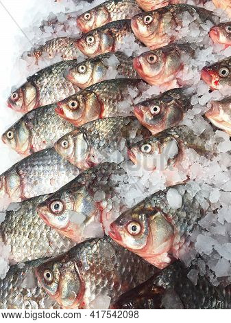 Raw River Fish Carp (carassius) On Ice In A Supermarket. Fresh Chilled Carp At The Fish Market. Rive