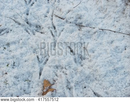 Background: White And Blue Snow With Bird Tracks