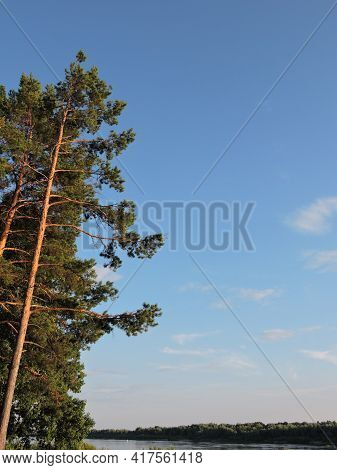 Photo Of A Tall Pine Tree On The River Bank, Summer Green Landscape, Sunny Weather, Blue Water, Fore