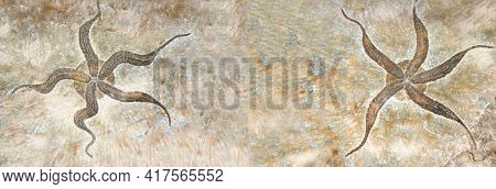 Horizontal banner with two petrified fossil starfish in stone on brown color. Mock up template. Copy space for text