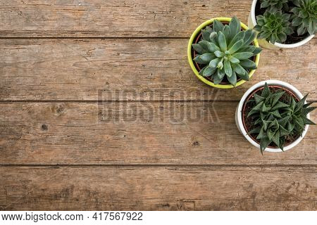 Three succulent plants in flower pots on wooden table, top view with copy space