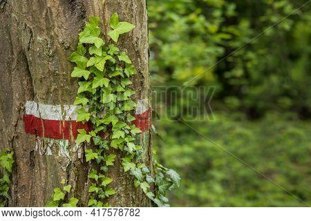 hiking mark on a tree