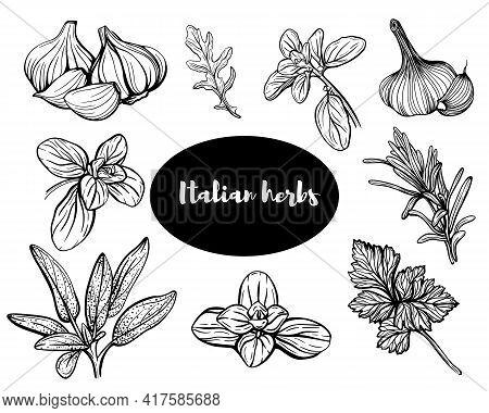 Italian Herbs Sketch.set Of Herbs. Aromatic And Fragrant Seasonings. Hand Drawn Illustration. Design