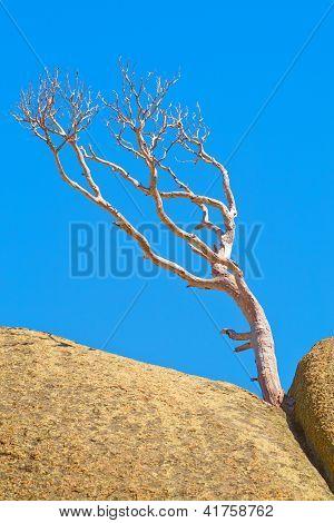 einsamer toter Baum stehend auf einem Stein gegen den blauen Himmel