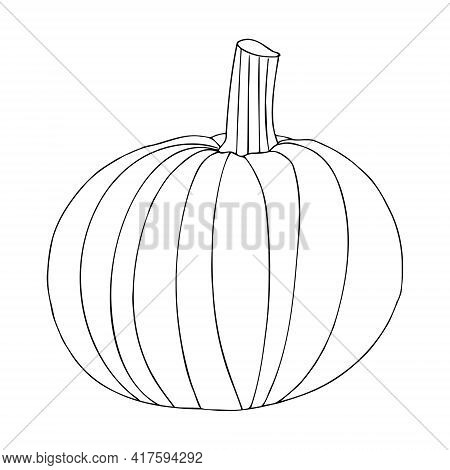 Vector Pumpkin In Doodle Style. The Pumpkin Is Drawn With One Line. Big And Small Pumpkins For Thank