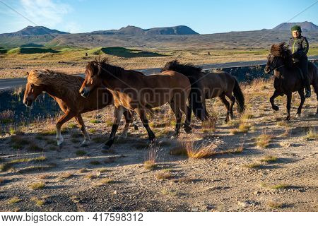 South Iceland - July 23, 2017: A Herd Of Icelandic Horses In A Pasture In Iceland