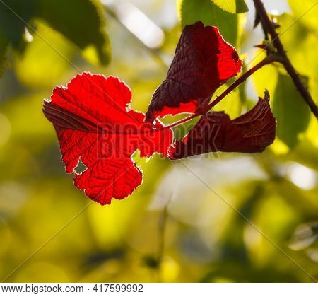 Autumn red leaves on nature background
