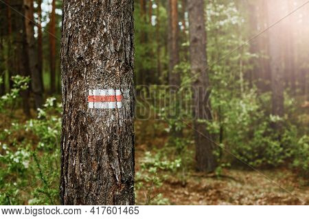 Walking Trail Background. Red Forest Path. Brown Tree Trunk. Guide Sign Made With Paint. Symbol Poin