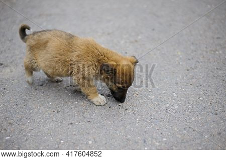 Little Puppy. Portrait Of A Cute Funny Red-haired Puppy. Homeless Hungry Dog Looking For Food On The