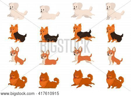 Set Of Dogs In Different Poses. Bichon Bolognese, Yorkshire Terrier, Chihuahua And Spitz In Cartoon