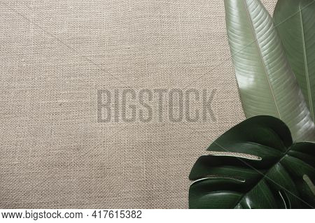Green Tropical Leaves On A Natural Hessian Background Including Monstera Leaf And Strelitzia Leaves