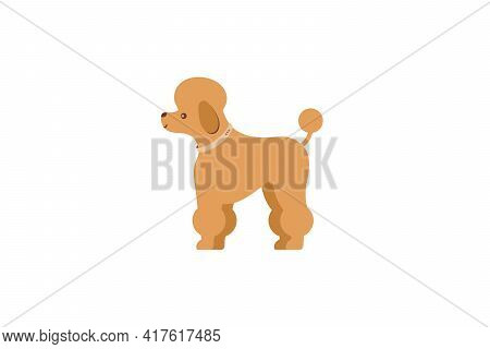 Decorative Dog - French Poodle In A Collar. Dog Icon Or Logo Element.vector Illustration. Flat Style