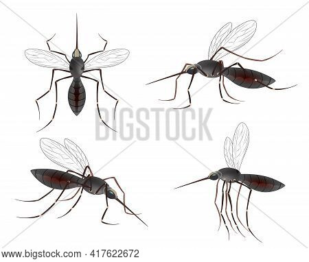 Realistic Mosquito. Blood Sucking Insects, Peddler Of Dengue. A Massive Mosquito Problem.