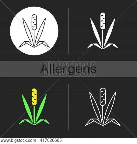 Timothy Grass Dark Theme Icon. Herbal Allergen. Cause Of Allergic Reaction. Wild Field Foliage. Alle