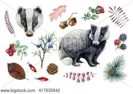 Badger Animal, Forest Natural Element Set. Watercolor Hand Drawn Illustration. Wild Forest Badger, R