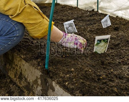 Pplant Seeds Are Planted By Woman In Soil In Greenhouse. Seeds, Bag, Loose Soil, Gloved Hand.