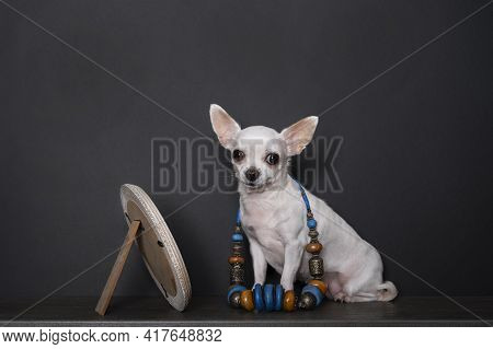 A Small Chihuahua Dog Sits By A Mirror Displaying A Black Pearl Necklace And Costume Jewelry. A Stud