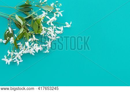 Bouquet Of Small White Fragrant Flowers Of Clematis Recta Or Clematis Flammula On Emerald Background