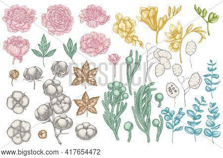 Vector Set Of Hand Drawn Pastel Ficus, Eucalyptus, Peony, Cotton, Freesia, Brunia Stock Illustration