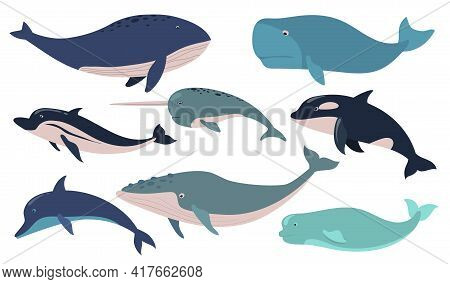 Creative Whales And Dolphins Flat Pictures Set For Web Design. Cartoon Cute Narwhal, Orca, Beluga An