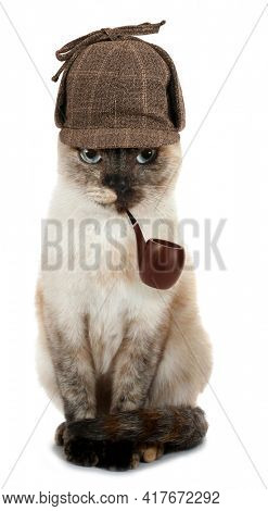 Grumpy cat detective with pipe isolated on white background conceptual photo