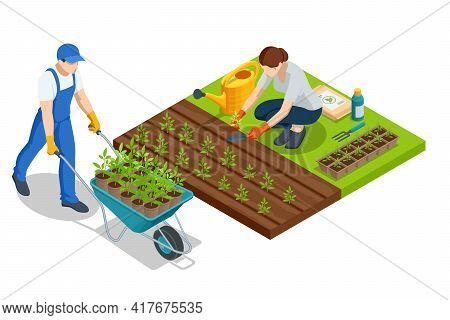 Isometric Young Vegetable Seedlings Of Transplanting Into Peat Pots Using Garden Tools. Woman Transp