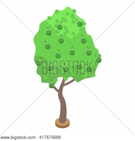 Green Pear Fruit Tree Icon. Isometric Of Green Pear Fruit Tree Vector Icon For Web Design Isolated O