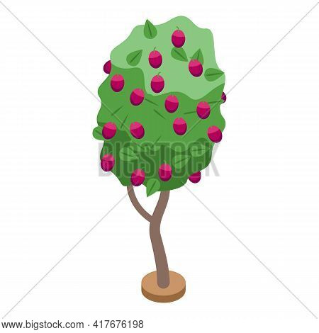 Plum Fruit Tree Icon. Isometric Of Plum Fruit Tree Vector Icon For Web Design Isolated On White Back