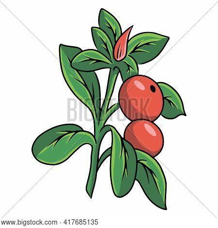 Berries. Edible Berries. Healthy Berries. Cartoon Style.