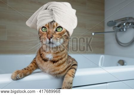 Domestic Cat Wrapped In A White Towel In The Bathroom