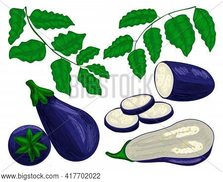Plant Eggplant With Leaves And Stem Of Vegetable.
