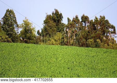 Lush Green Field Surrounded By A Deciduous Forest Taken At A Prairie In The North American Great Pla