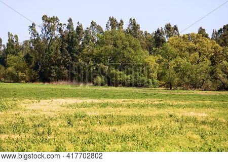 Lush Grassy Field Surrounded By Deciduous Trees Taken On A Prairie At A Rural Plain In The North Ame
