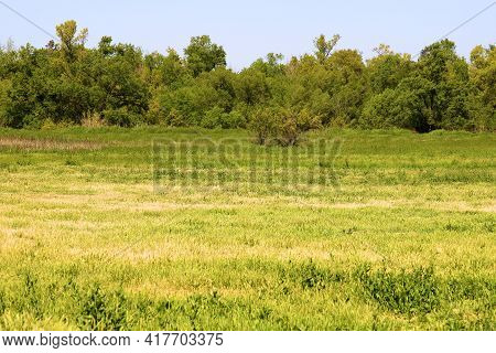 Lush Green Meadow On Rural Grasslands Besides A Deciduous Forest Taken At A Prairie In The North Ame