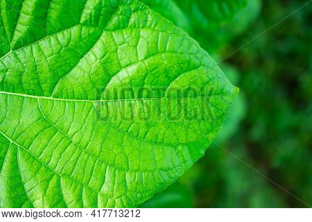 Structure Leaves Close Up. Green Nature Outdoor With Leaf In Park Or Forest.soil With Dry Ground Blu