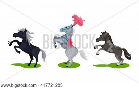 Horse With Crest Standing On Hind Legs Vector Set.