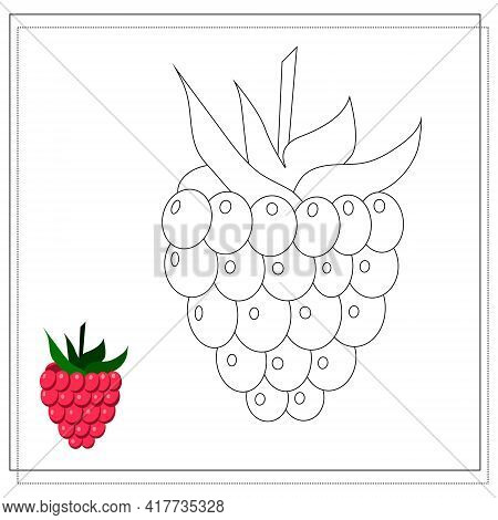 Page Of The Coloring Book, Raspberry. Color Version And Sketch. Coloring Book For Kids. Vector Illus