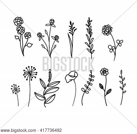 Set Of Hand Drawn Wildflowers And Herbs