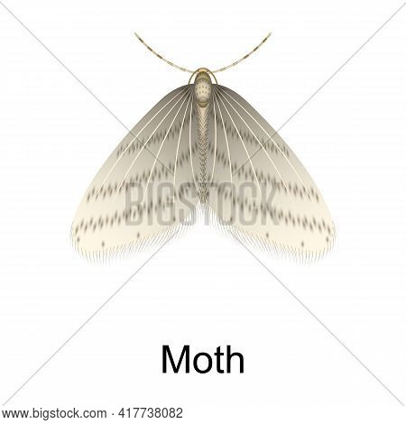 Beetle Moth Vector Icon.realistic Vector Icon Isolated On White Background Beetle Moth.