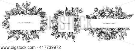 Floral Frames With Black And White Laelia, Feijoa Flowers, Glory Bush, Papilio Torquatus, Cinchona,