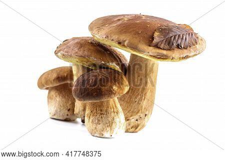 Group Boletus Mushroom Isolated On White Background.boletus Mushrooms, Porcini Mushroom, Forest, Edi
