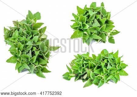 Set Of Lemon Balm Leaves, Lemon Balm Isolated On A White Background, Clipping Path.selective Focus