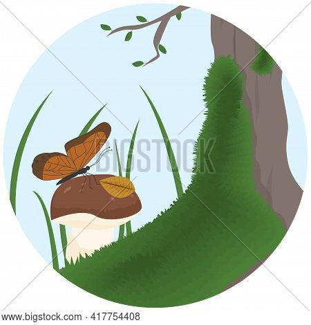 A Butterfly Lands On A Mushroom. Boletus Growing Near A Tree With Moss. Forest Landscape With White